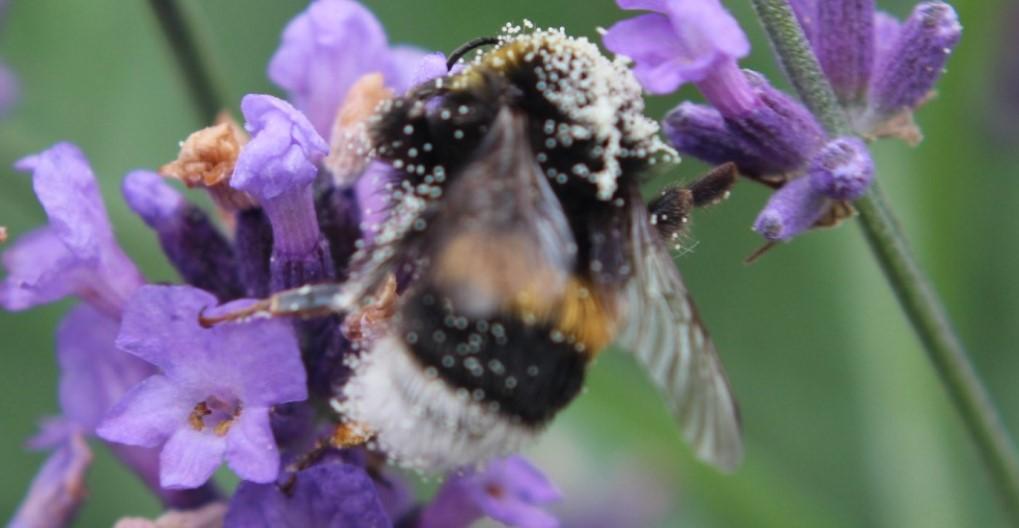 Blumenladen Lockenvitz (Bender) schließt zum Ende des Jahres