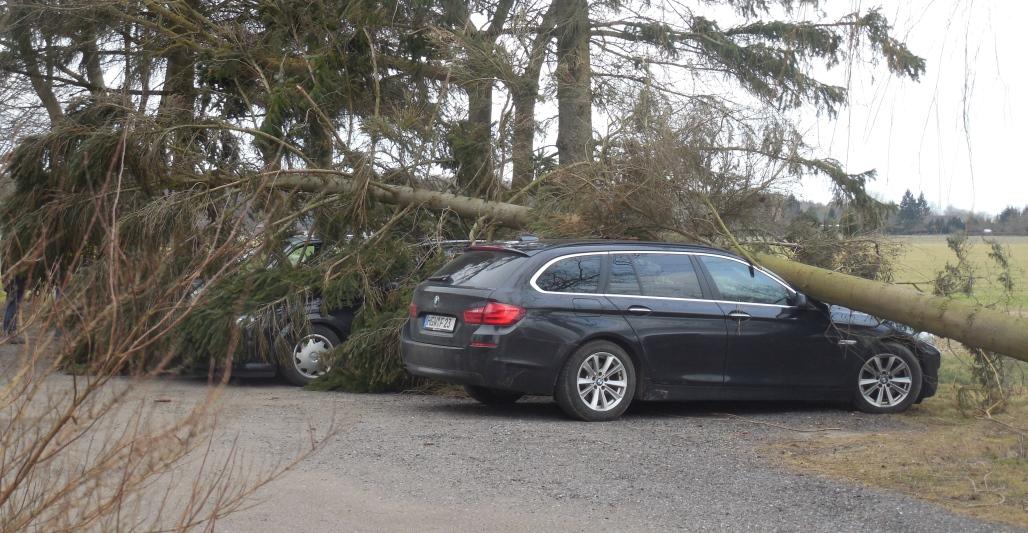 OZ berichtete – Baum stürzt auf parkende Autos