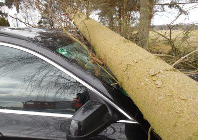 NEWS - 2018_03 OZ berichtete - Baum stürzt auf parkende Autos (Webseite Galerie3)
