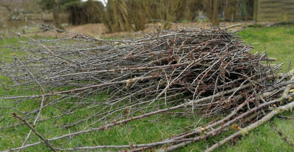 Umgang mit Baum- und Strauchabfällen 2021